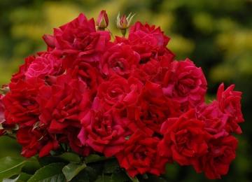 Sõbrapäeval avame oma lillepoe